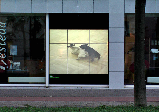 Eike: After Laika, Extended Views, Maastrich 2004